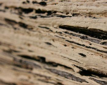 Macro - Wood